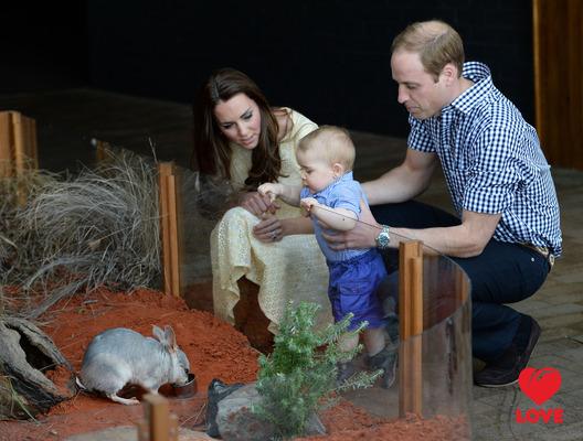 Кейт Миддлтон и принц Уильям посмотрели на редких зверей