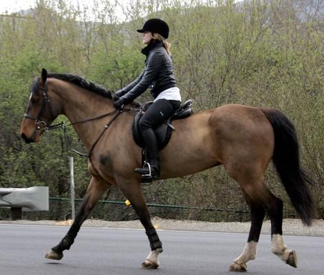 Мадонна на лошади
