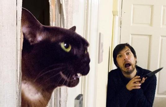 Англичанин Дэвид и его кот