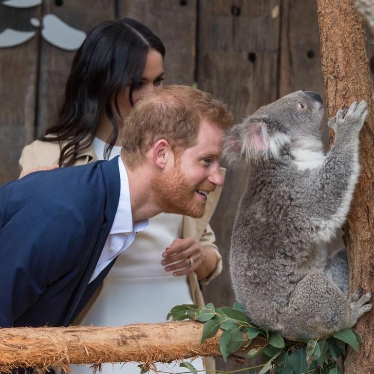 Принц Гарри и Меган Маркл в зоопарке Taronga Zoo