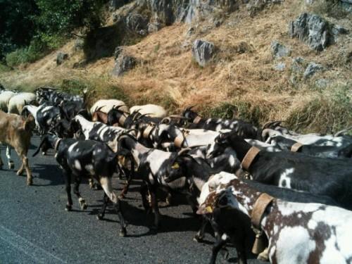 «Пробки» по-итальянски впечатлили Ким Кардашиан