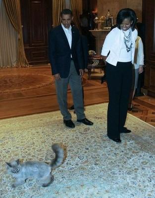 От Дмитрия Медведева сбежал любимый кот