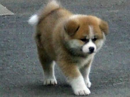 Собаки путина породы фото